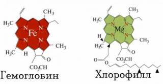Сравните строение Хлорофилла растений и Гемоглобина крови человека.