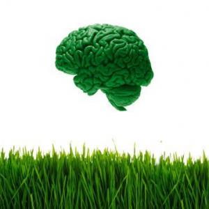Мысль изменяет мозг