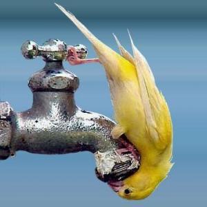 Качественная вода для похудения