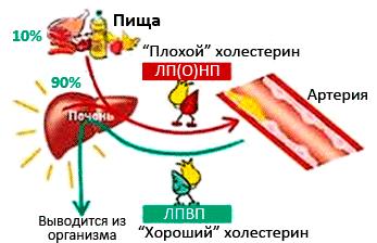 Голодание и атеросклероз нижних конечностей