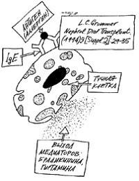 Механизм анафилактоидной реакции