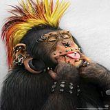 Деволюция человека - человек не произошёл от обезьяны
