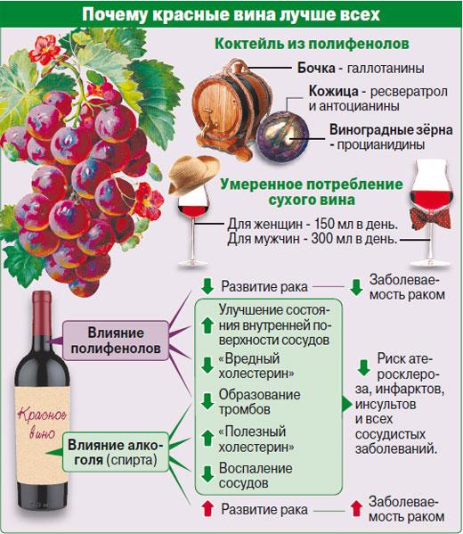 Вино полезнее водки: оно защищает сердце и замедляет старение