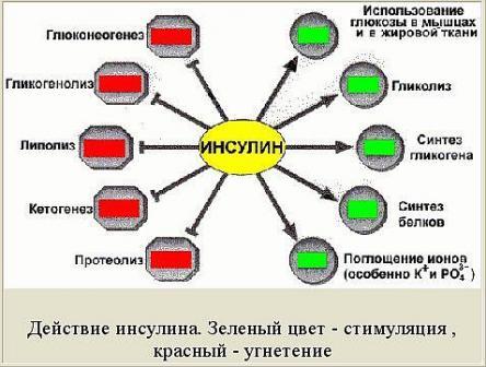 http://zenslim.ru/sites/default/files/resize/uploads/Insulin1-444x336.jpg