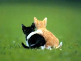 Как мы мешаем друг другу худеть